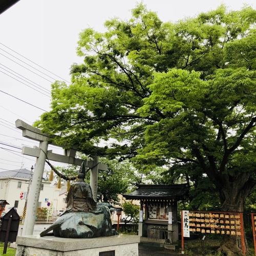 五月八日 梅雨の足音のように雨音が響いています。